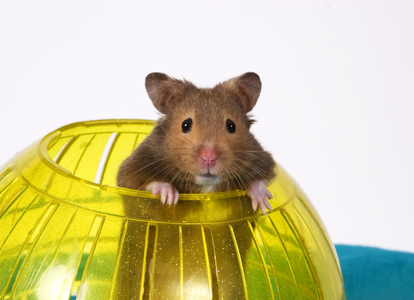 Are hamster balls good for hamsters?