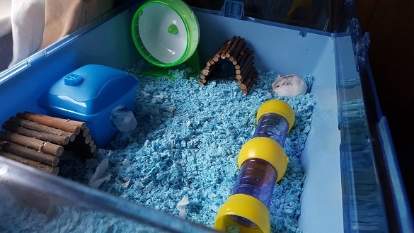 How to clean a hamster cage? Make it as spotless as this