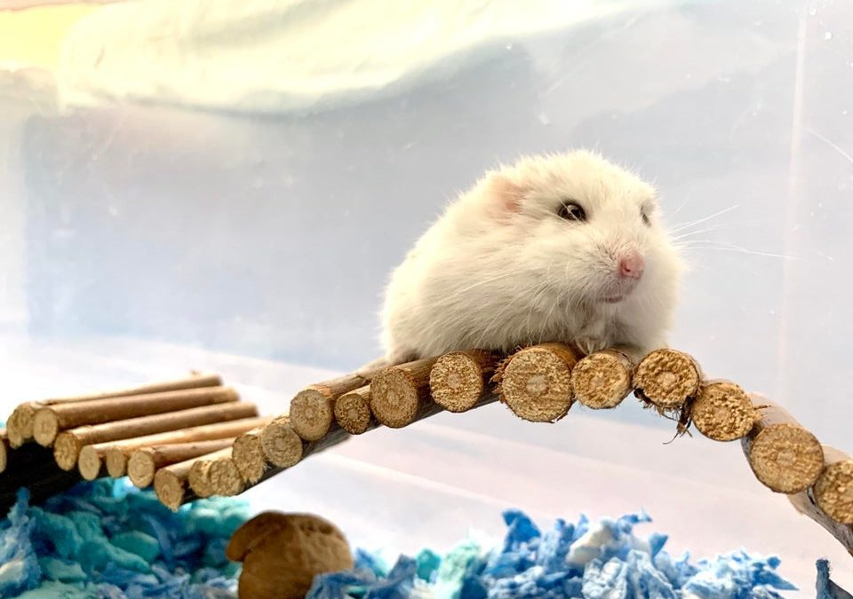 How to play with a hamster – Hamster handling guide