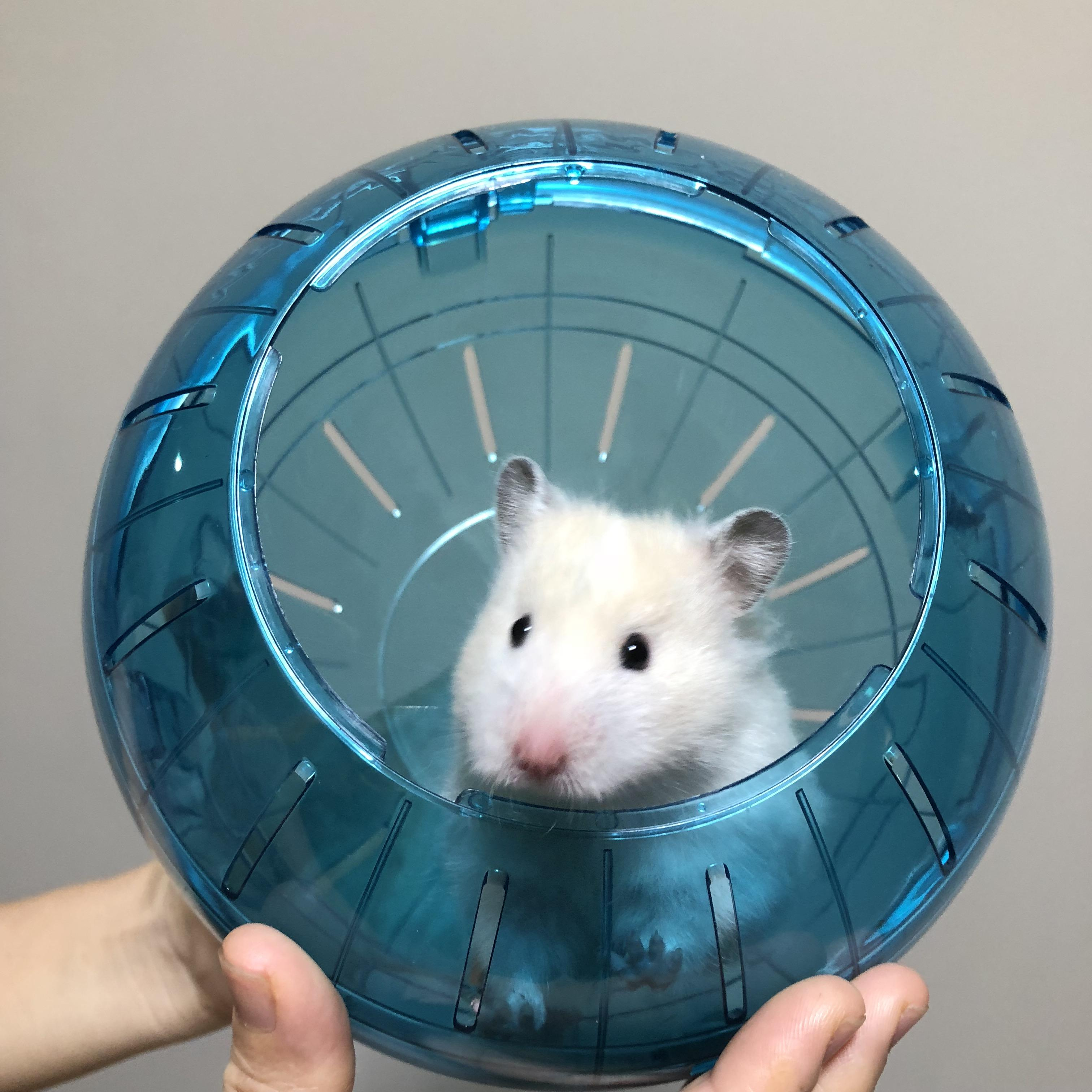 Are hamster balls good for hamsters? No, but heres a cute hamster