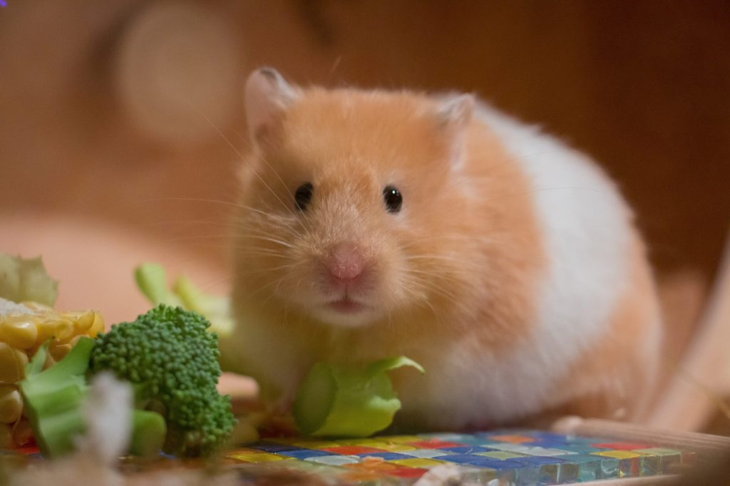Hamster and their greens