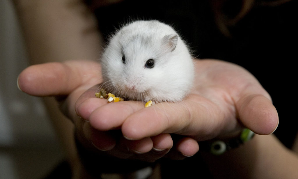 Do hamsters like belly rubs. This one might.