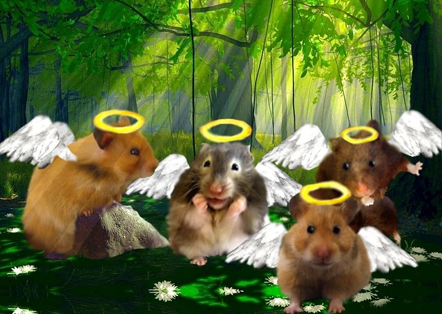 Do hamsters go to heaven. These hamsters are.