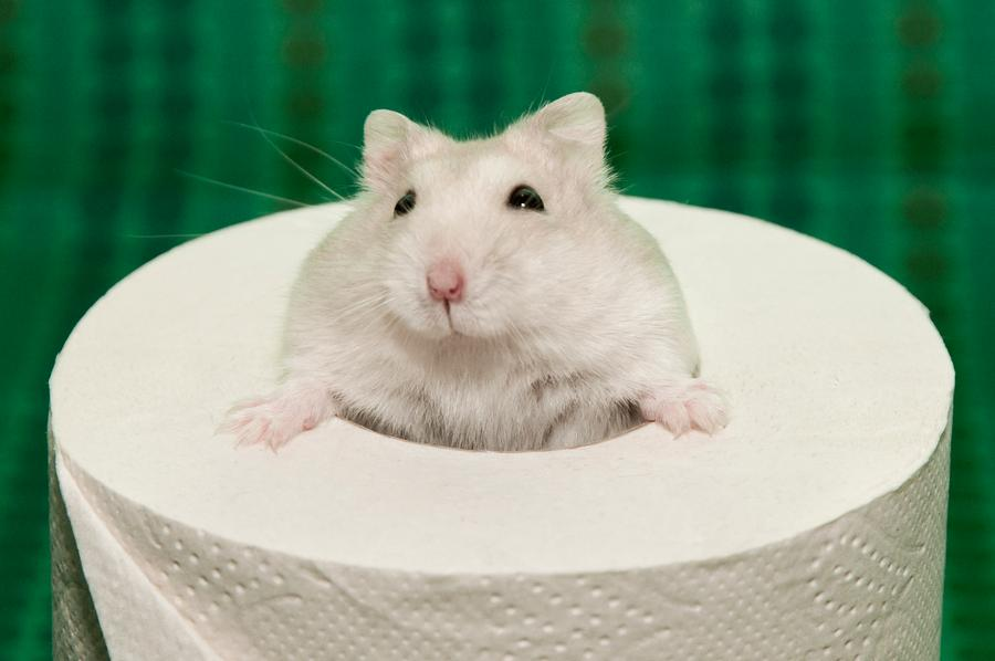 What can you use for hamster bedding?