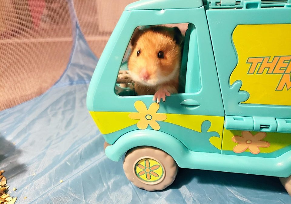 Can Hamsters Eat Ice Cream?