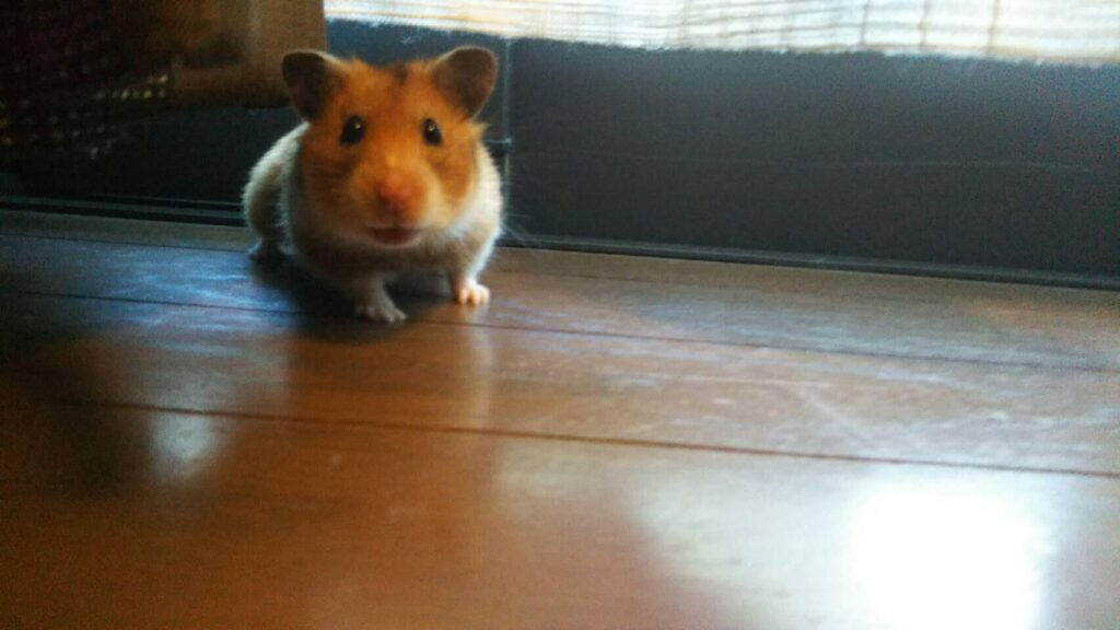 This hamster looks curious!