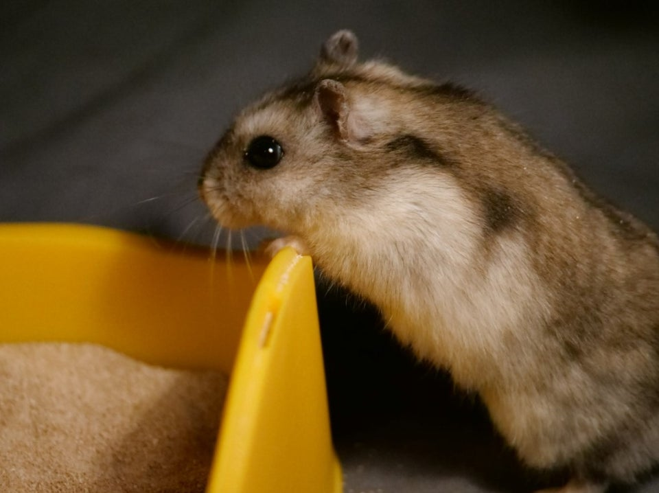 What a lovely hamster!