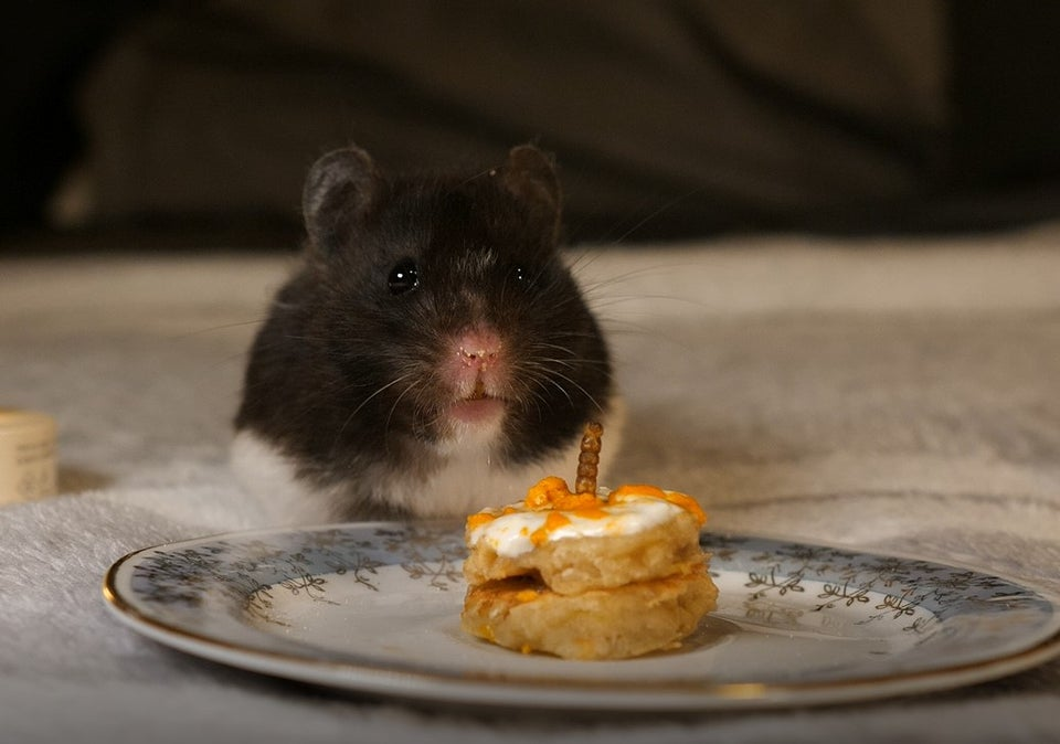Happy Birthday Hamster!