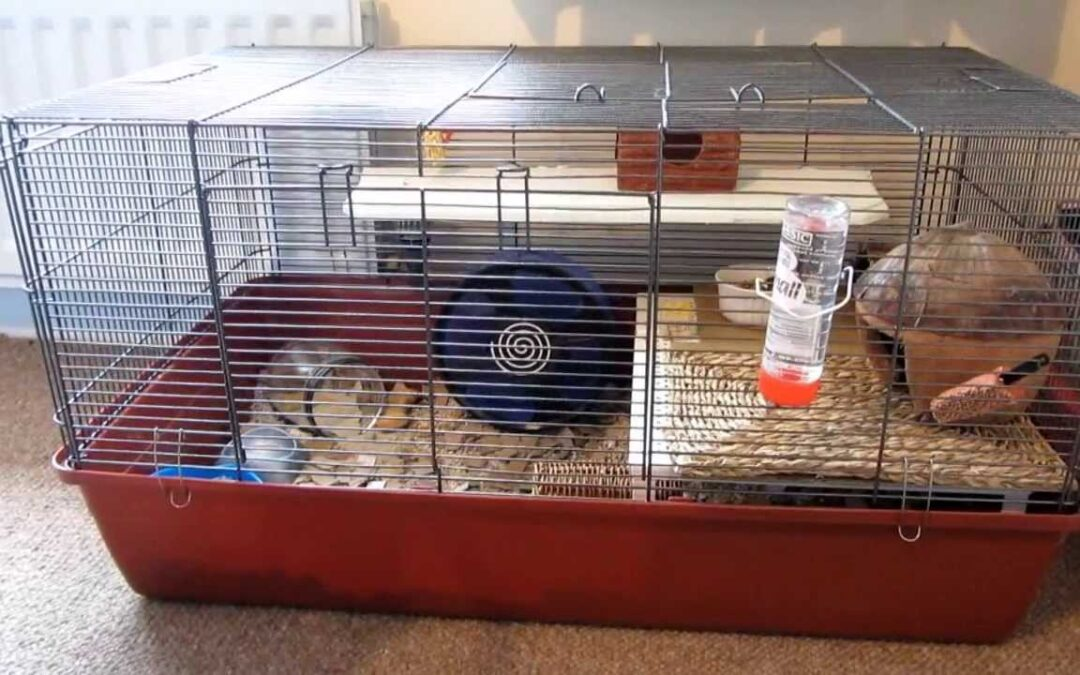 Alaska Hamster Cage Review + How to Buy.