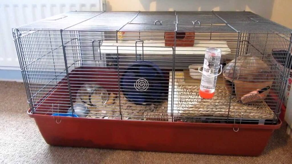 This person added an extra platform to their alaska cage!