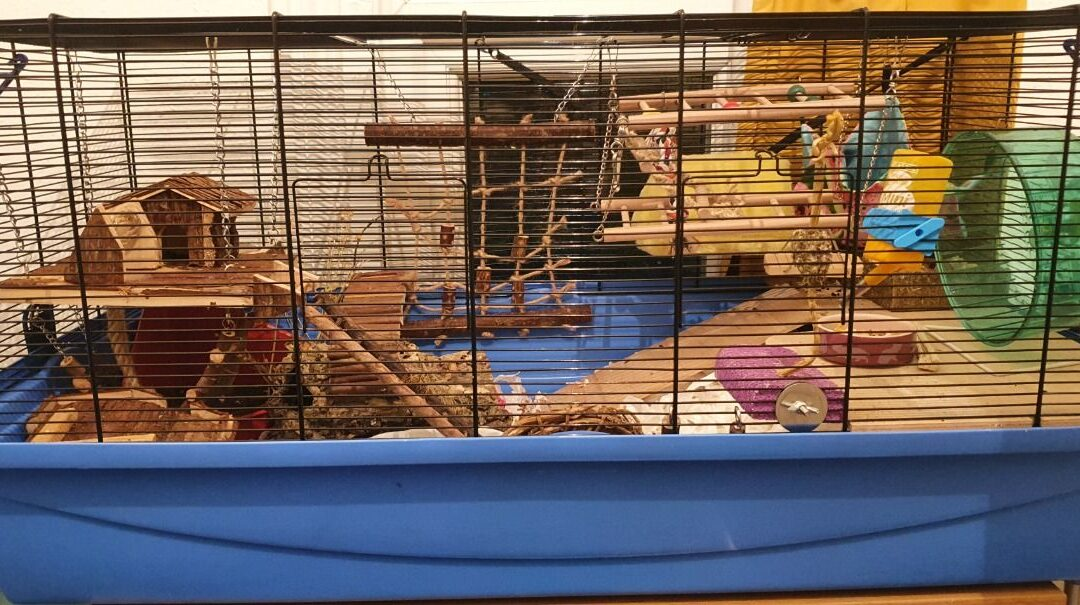 Barney Hamster Cage + How To Buy.